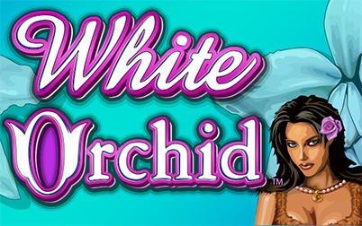 White Orchid Slot Machine Game