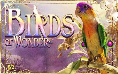 Play Birds of Wonder - Slots - High 5 Games