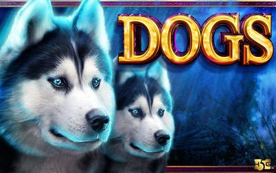 Play Dogs - Slots - High 5 Games